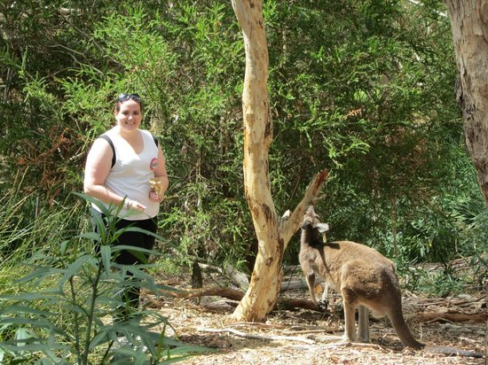 Warrawong Sanctuary:                   Getting up close