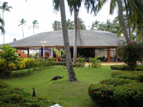Vista Sol Punta Cana:                                     buffet