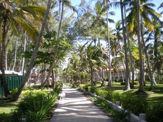 Vista Sol Punta Cana:                                     hotel