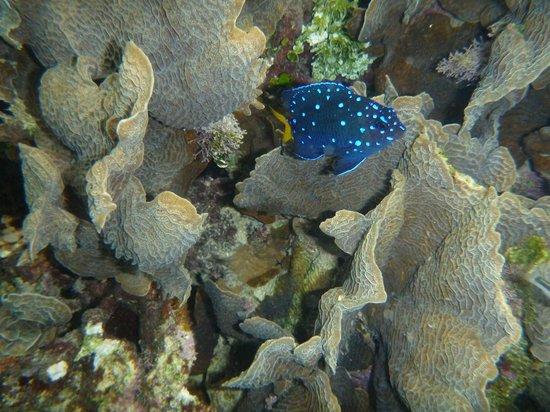 Stephen's Island Charters:                   Amazing snorkeling