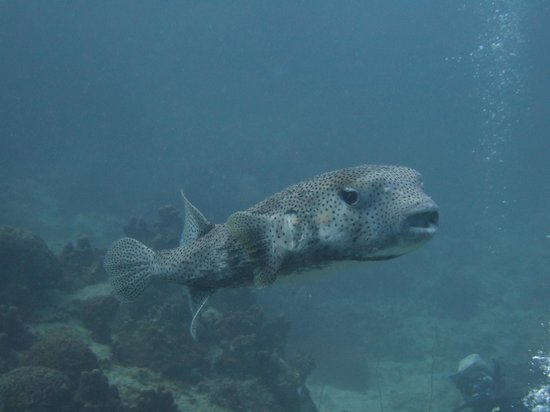 Master Divers:                                     My underwater puppy