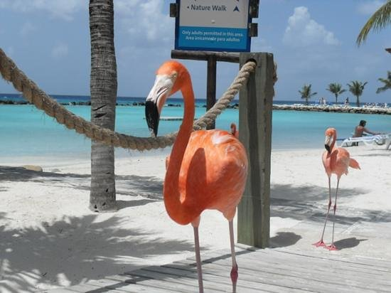 Renaissance Aruba Resort & Casino:                   The pelicans are so tame....