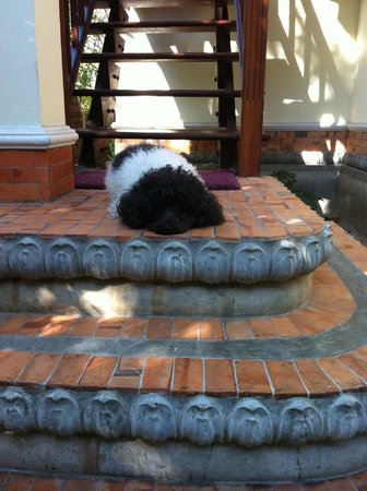 Santitham Guest House:                   Cute guest house dog