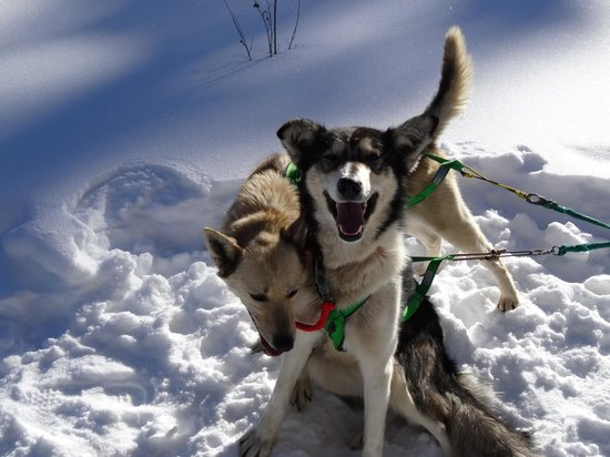 Krabloonik Dogsled Rides:                   Two of the dogsled team
