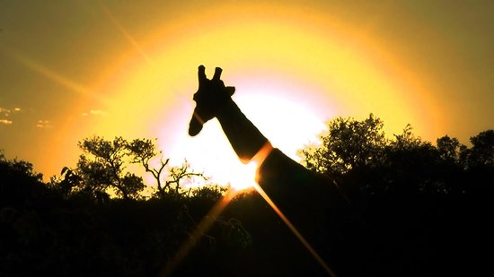 Naledi Bushcamp and Enkoveni Camp: Sunrise