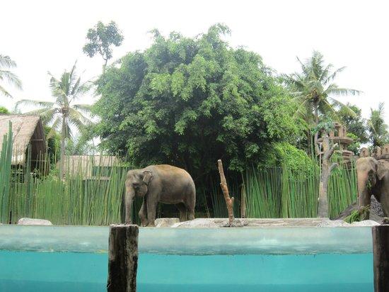 Bali Safari & Marine Park:                                     Elephant Show