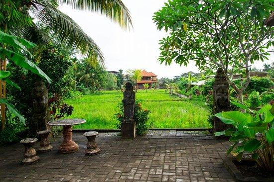 Gayatri Bungalows:                   Рисовое поле