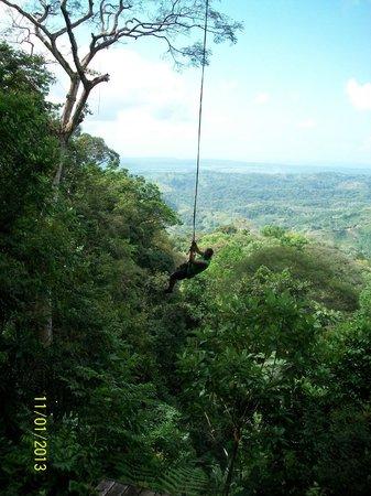 Osa Canopy Tour:                   tarzan swing