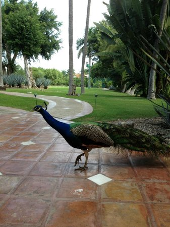 Casa Velas:                   He didn't show off enough for me!