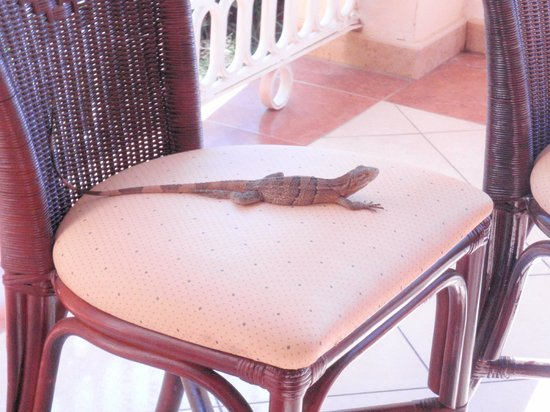 Hotel Riu Guanacaste:                   Our little friend joing us for dinner at the pool buffet!
