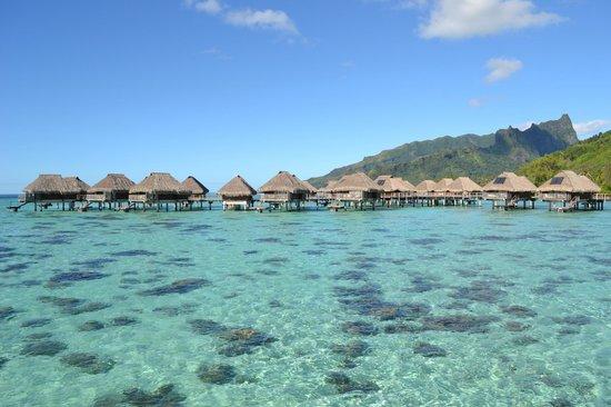 Hilton Moorea Lagoon Resort & Spa:                   LA VISTA DESDE LA HABITACION BUNGALOW