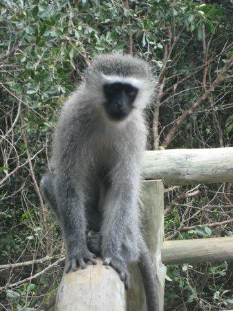 Tsala Treetop Lodge:                   Aufpassen mit dem Essen