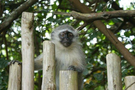Tsala Treetop Lodge:                   Unsere Gäste am Nachmittag