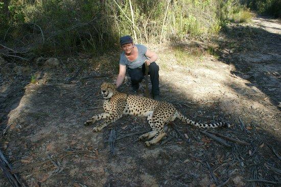 Tsala Treetop Lodge:                   MIt den Geparden spazieren in Tenikwa