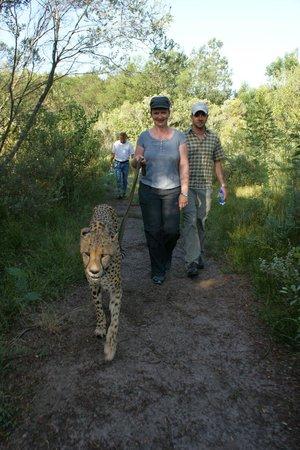 Tsala Treetop Lodge:                   Gemütlich am Spaziergang