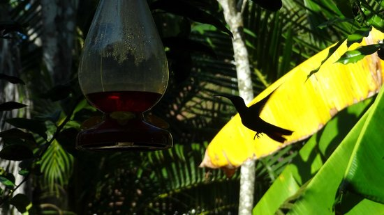 Hotel Pochote Grande: Kolibri