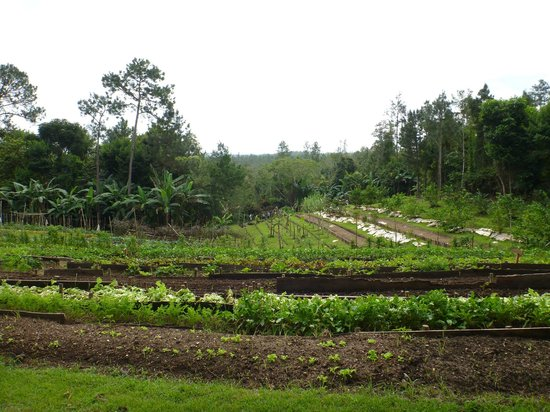 Blancaneaux Lodge:                   Organic Garden