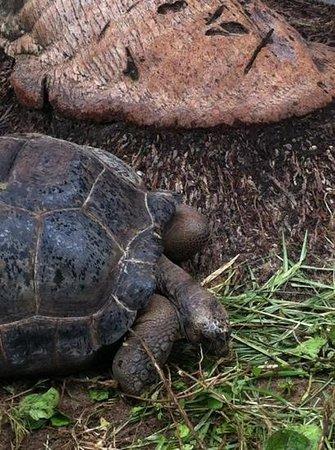 Chalets d'Anse Forbans:                   Die Schildkröten der Anlage