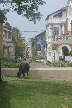 Amangalla:                   Blick vom Hotel in Richtung Festung/Meer