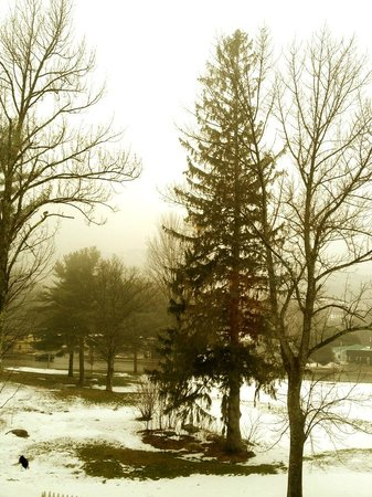 Red Jacket Mountain View Resort & Water Park:                   Winter tree in the fog.