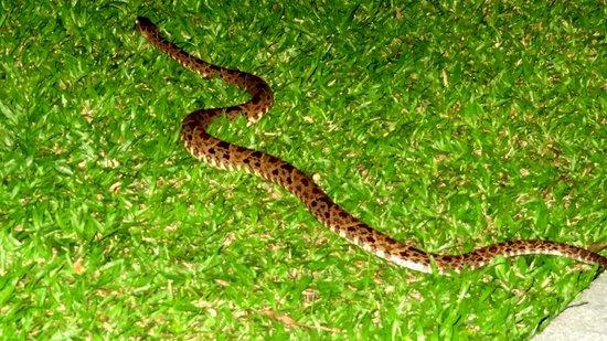 Arenal Springs Resort and Spa: Nächtlichen Besucher die man besser vermeidet... ;)