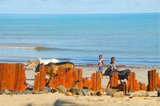Belle plage suite:                   La spiaggia