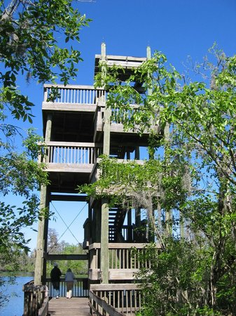 Lettuce Lake Regional Park: Observation Tower