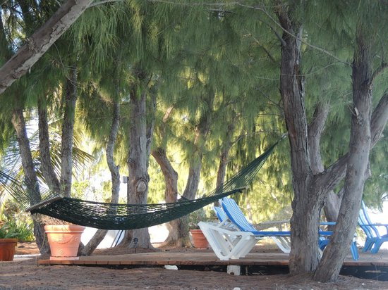 Hollywood Beach Suites Turks and Caicos:                   Hollywood Hammock