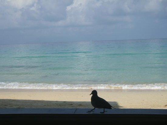 Coral Strand Smart Choice Hotel Seychelles:                   Breakfast Partner