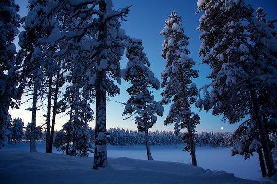 Arrenjarka Mountain Lodge:                   The view