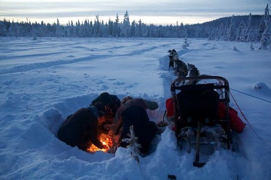 Arrenjarka Mountain Lodge:                   Dog Sled Ride