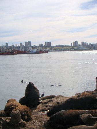 Puerto de Mar del Plata: lobo marino