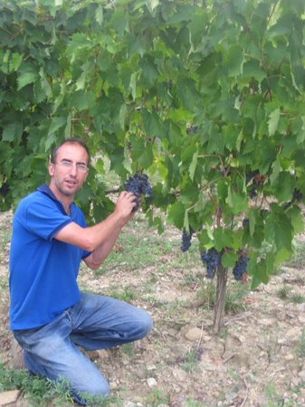 Fattoria Poggerino:                   Piero in the vineyard