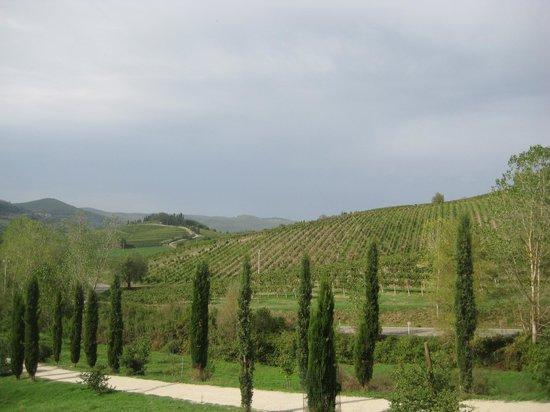 Fattoria Poggerino:                   driveway up to the B&B and vineyard