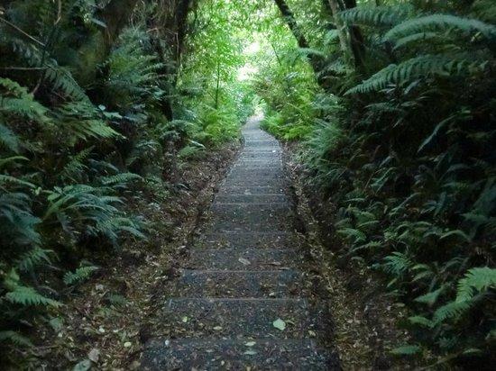 Ruggedy Range Wilderness Experience:                   Nice walking