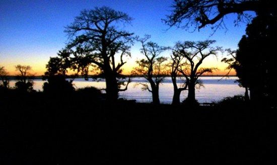 Ulisa Bay Lodge:                                     Sunset through the baobab trees