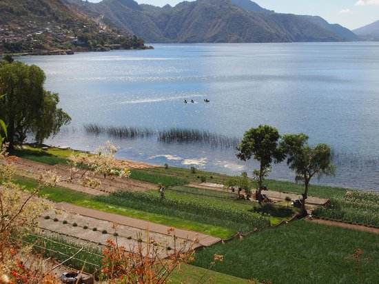 Lake Atitlan:                   Onion Fields on East Side of Lake