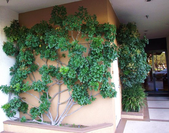 Radisson Hotel Newport Beach: landscaping