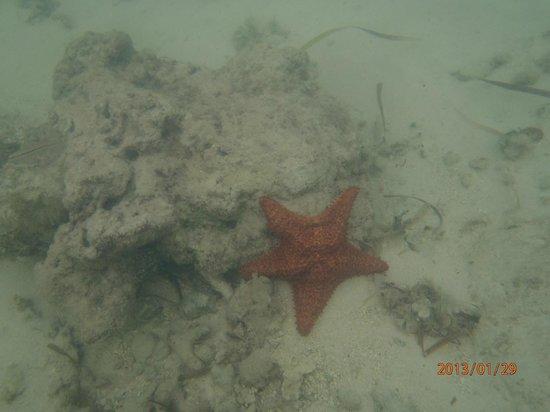 Catalonia Bavaro Beach, Casino & Golf Resort :                   Starfish