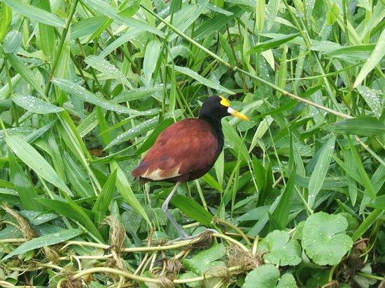 لا باولا لودج:                   Best birding opportunities                 