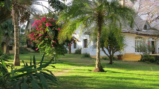 Arusha Safari Lodge:                   Main lodge house and trees