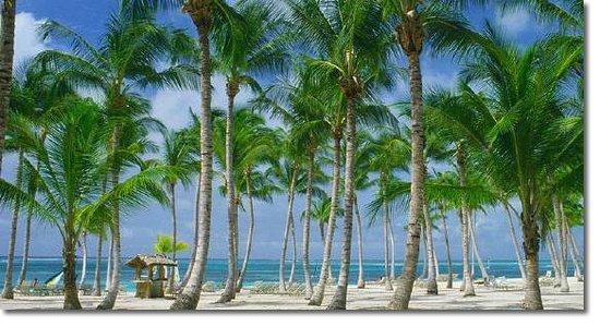 Campamento Punta Cana: Vista de Piscina