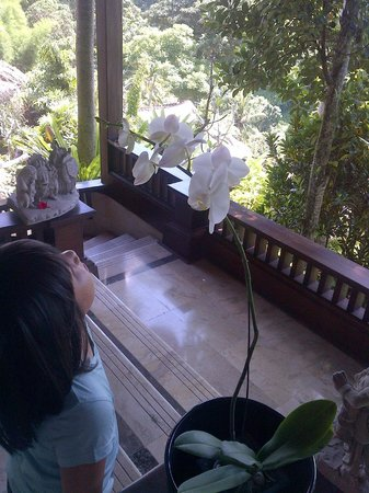 Pita Maha Resort and Spa:                   Moon Orchid