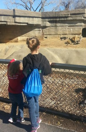 Tulsa Zoo:                   my girls at the zoo