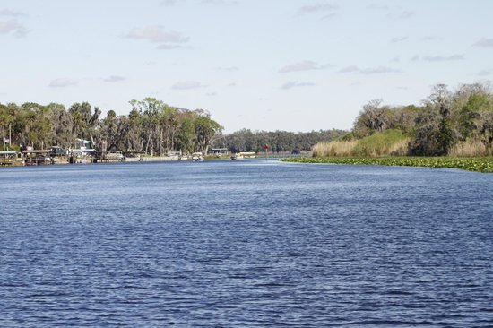 Blue Heron River Tours:                   Beauatiful river