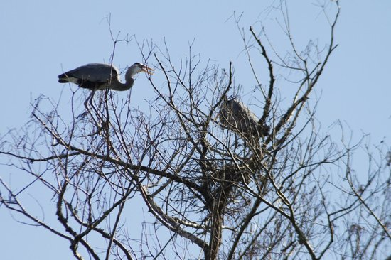 Blue Heron River Tours:                   Building a home