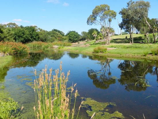 Werribee Open Range Zoo: Gorilla Exhibit and Natural Wetland