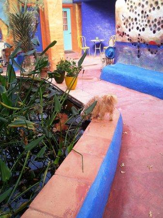 Eve's Garden Bed & Breakfast:                   Koi pond in the indoor garden area