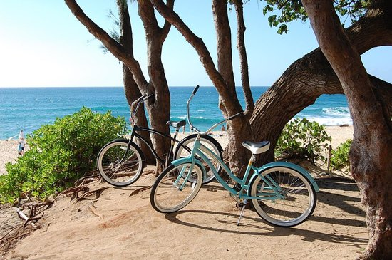 North Shore Bike Rentals