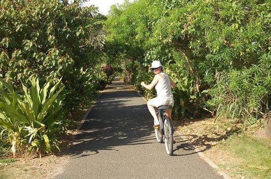 North Shore Bike Rentals: Bike Path is safe fun for all!